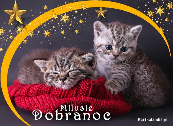 eKartki elektroniczne z tagiem: Kot Milusie Dobranoc!,