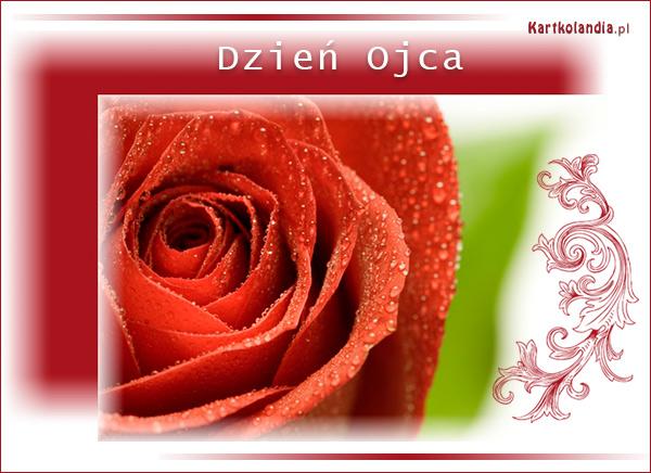 Róża dla Taty