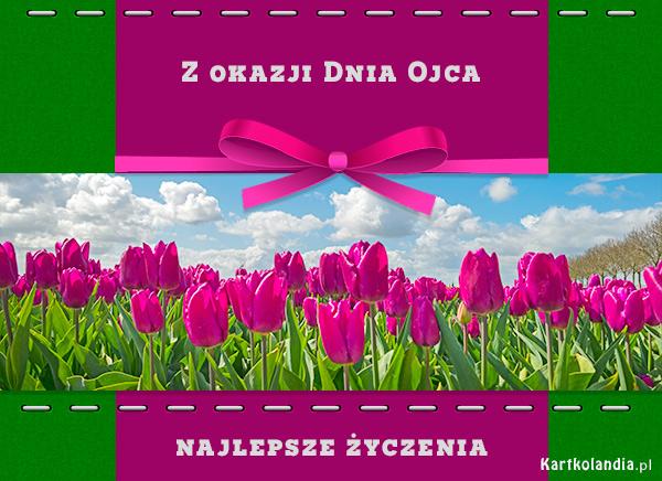 Łąka tulipanów
