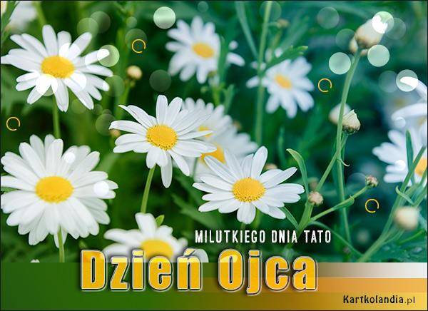 eKartki elektroniczne z tagiem: Pozdrowienia Milutkiego dnia Tato!,