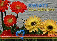 eKartki Dzieñ Babci i Dziadka Kwiaty dla Dziadka,