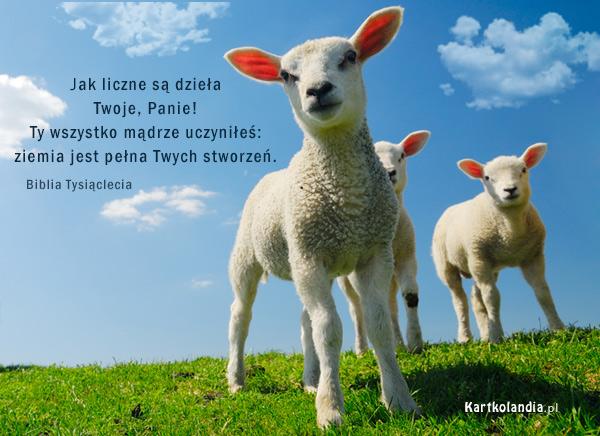 Owieczki Pana