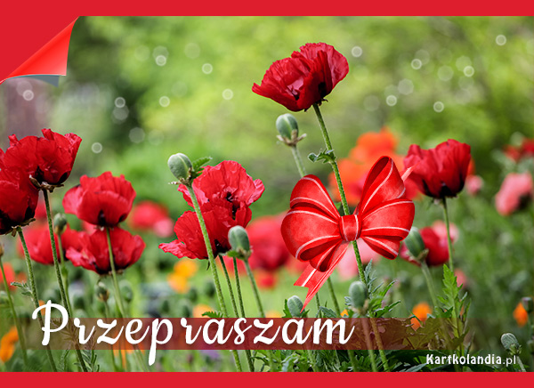 eKartki Wyraź uczucia -> Przepraszam Kwiaty wszystko powiedzą...,