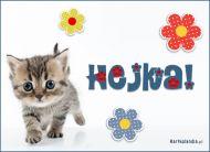 eKartki elektroniczne z tagiem: Kot Hejka!,