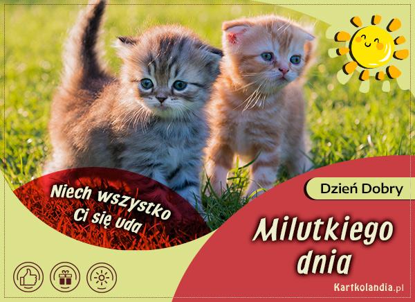 eKartki elektroniczne z tagiem: Kot Milutkiego dnia,