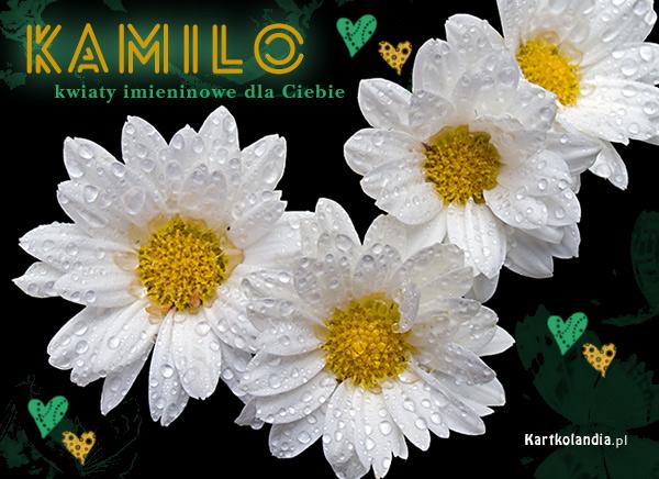 Kwiatuszki dla Kamili