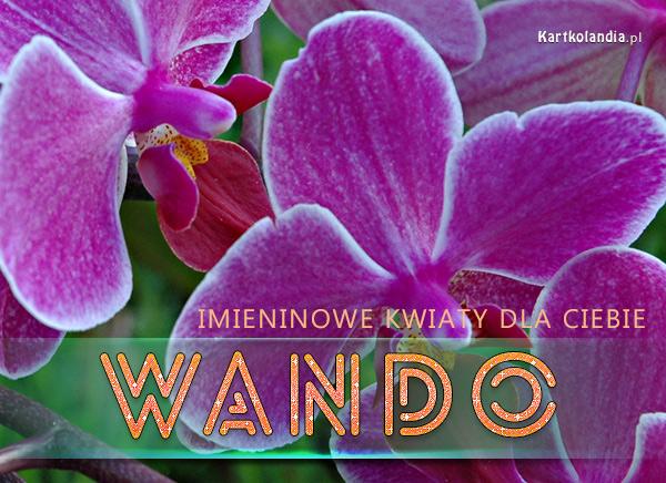 Kwiaty dla Wandy