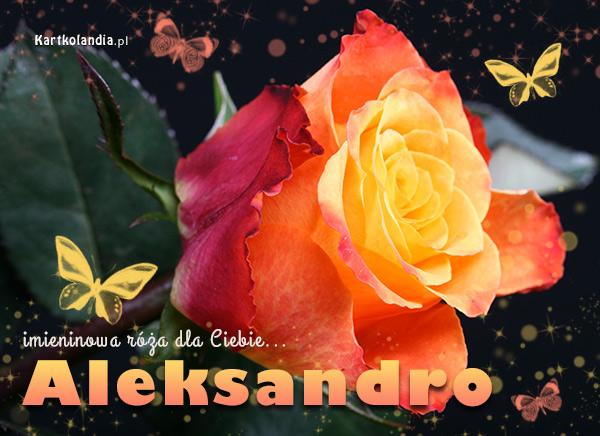 Róża dla Aleksandry