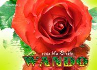 eKartki Imienne damskie e-Kartka imieninowa z różą,