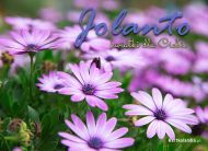 eKartki Imienne damskie Kwiaty dla Jolanty,