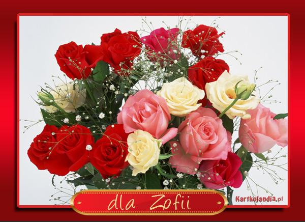 Róże dla Zofii