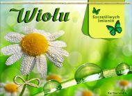 eKartki elektroniczne z tagiem: e-Kartka imieninowa Kwiatuszek dla Wioli,