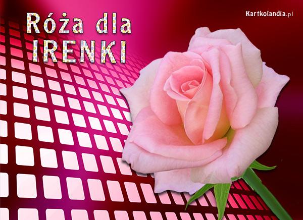 Róża dla Irenki