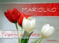 eKartki Imienne damskie Tulipanki dla Mariolki,