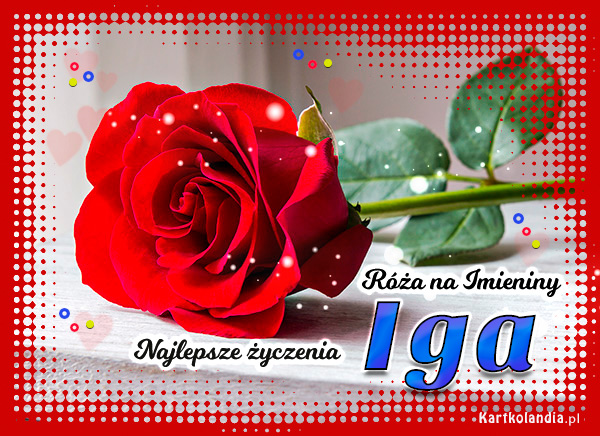 Róża na Imieniny dla Igi