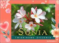 eKartki Imienne Damskie Sonia - Pocztówka Imieninowa,