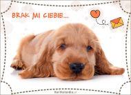 eKartki elektroniczne z tagiem: e-Kartka z psem Brak mi Ciebie,