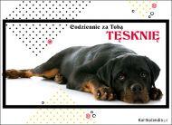 eKartki elektroniczne z tagiem: e-Kartka z psem Codziennie za Tobą tęsknię,