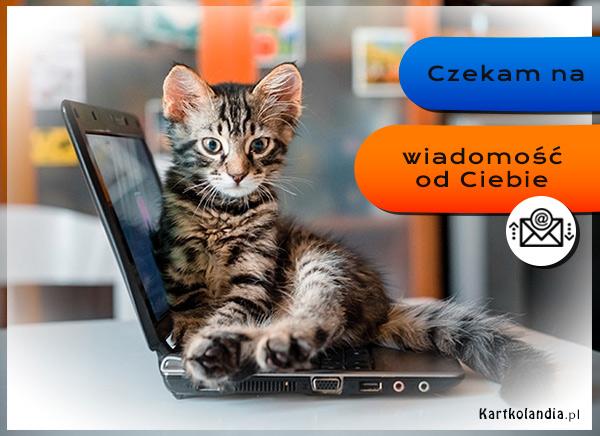eKartki elektroniczne z tagiem: Kot Czekam na wiadomość od Ciebie,