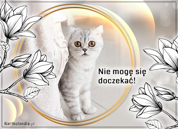 eKartki elektroniczne z tagiem: Kot Nie mogę się doczekać,