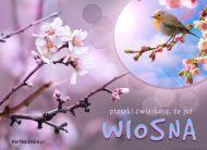 eKartki elektroniczne z tagiem: e-Kartki wiosenne Ju¿ wiosna,
