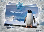 eKartki Cztery Pory Roku Kartka z pingwinkiem,