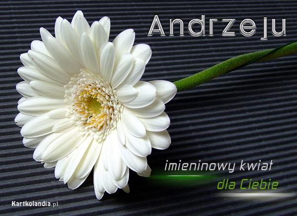 Kwiat dla Andrzeja
