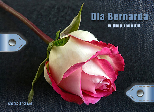 Dla Bernarda
