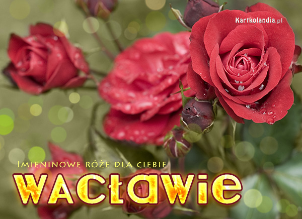 Róże dla Wacława