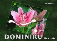 eKartki elektroniczne z tagiem: e-Kartka imieninowa Dominiku dla Ciebie,