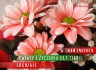 eKartki Imienne mêskie Imieniny Bogdana,
