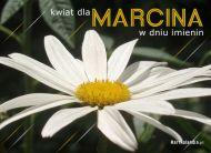 eKartki Imienne mêskie Kwiat dla Marcina,