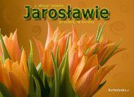 eKartki Imienne mêskie Tulipany dla Jaros³awa,