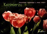 eKartki Imienne mêskie Tulipany dla Kazimierza,