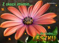 eKartki Imienne mêskie W dniu imienin Leszka,