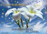 eKartki elektroniczne z tagiem: e-Kartka imieninowa Kwiaty dla Przemysława,