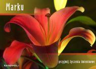 eKartki Imienne mêskie Kartka imieninowa dla Marka,
