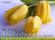 eKartki Imienne męskie Kwiaty dla Władysława,