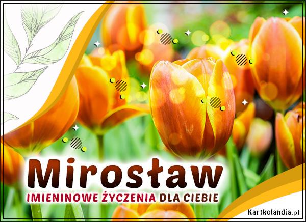 eKartki elektroniczne z tagiem: Życzenia na imieniny Imieninowe tulipany dla Mirosława,