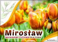 eKartki Imienne Męskie Imieninowe tulipany dla Mirosława,