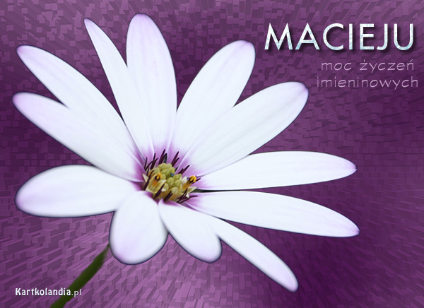 Imieninowy kwiat