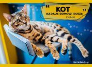 eKartki Złote Myśli Domowy kot,