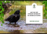 eKartki Złote Myśli Kartka z ptakiem,