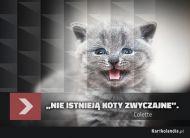 eKartki Złote Myśli Nadzwyczajny kot,