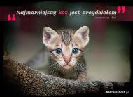 eKartki elektroniczne z tagiem: Kot Najmarniejszy kot,