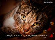 eKartki elektroniczne z tagiem: Kot Prawdziwy kot,