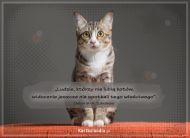 eKartki elektroniczne z tagiem: Kot Właściwy kot,