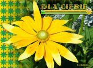 eKartki Kwiaty Dla Ciebie,