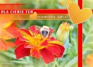 eKartki Kwiaty Niewinny kwiat,