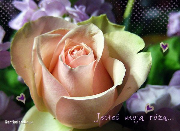 Jesteś moją różą